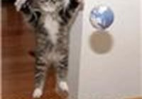 catlady66040