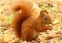PinkSquirrel