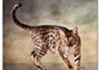 Kissankello avatar