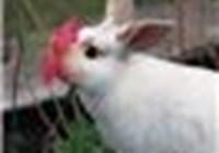Lesjac avatar