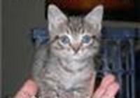 KittyDeiter606