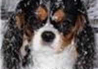 DrLOL98 avatar