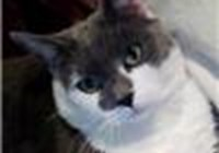 kittehlub avatar