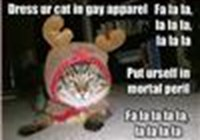 catattack1