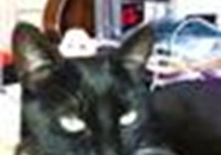 TuxFurCat