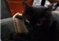 kittylubber