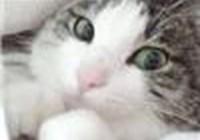 GummyKitteh avatar