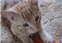 Shaun-teh-Kitten