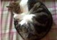 kittycat299