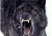 lolwolf87