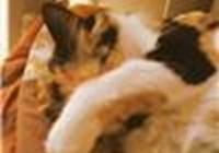 kittiespause