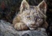 fire-kitteh