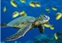 turtlehugger12