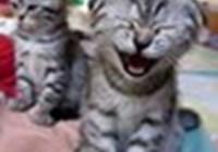 catsforcats