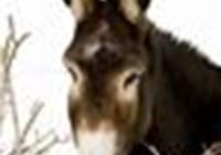 Mule_Packer