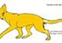 KittyWarrior99
