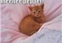 Pepper_Cat