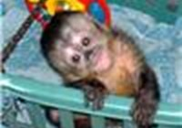 monkey0298