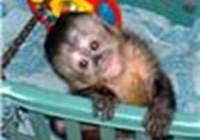 monkey0298 avatar