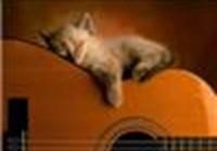 kitty-k