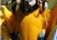 arandarbee1