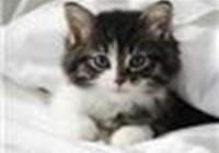 kittycatlover1050