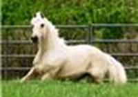 HorseRider3394