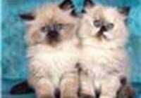 catwrangler2