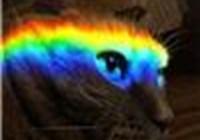 kittylovescheese