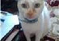corkiecat