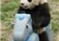 pandafun3