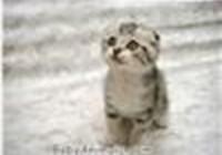 kittyluver2199