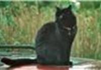 wafflycat