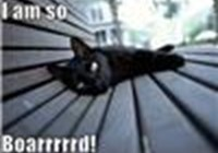 LOLcatsLuver1000