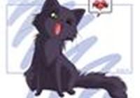 catlover803