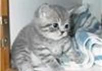 kitty2011