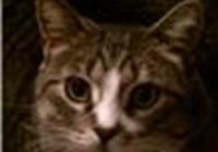 pennyfatcat