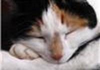 MeowBeep