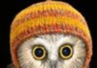 OwlSaint