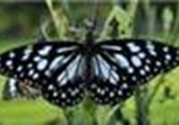 stripedbutterfly73