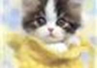 kittykat123456