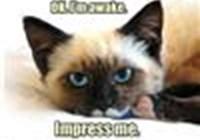 CatStyle