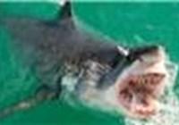 Shark_Boy8