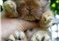 monkeyhusband