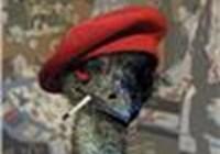 hornbill-guy