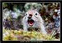 Ground__Squirrel