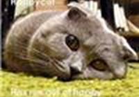 Fuzz_cat
