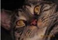 kitty14618