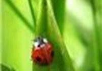 LadyBug93