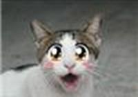waterkat